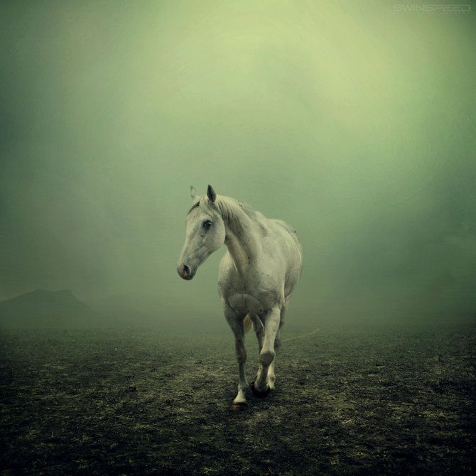 horses are so beautiful: Equine Photography, The White Horses, Toms Crui, Horns, Veils, Mists, Horses Photography, Shades Of Green, Hors Photography