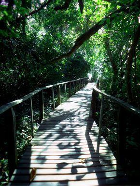 Andando por los senderos vivos del Parque Nacional Cahuita.