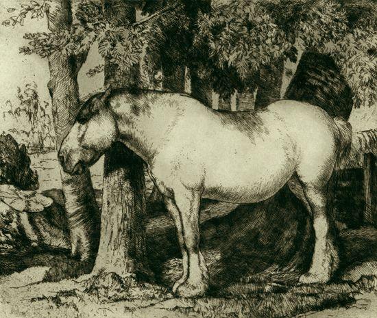 whitehorse2.jpg - 330841 Bytes