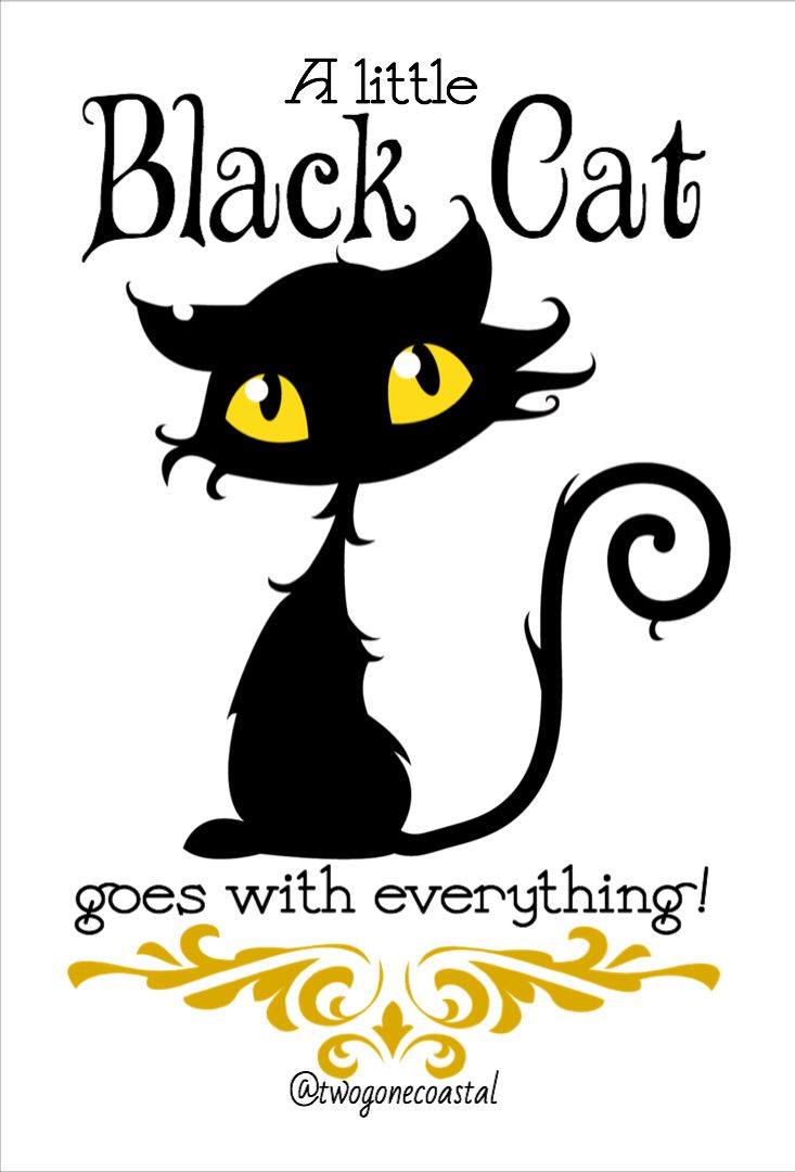 A little black cat goes with everything. @twogonecoastal