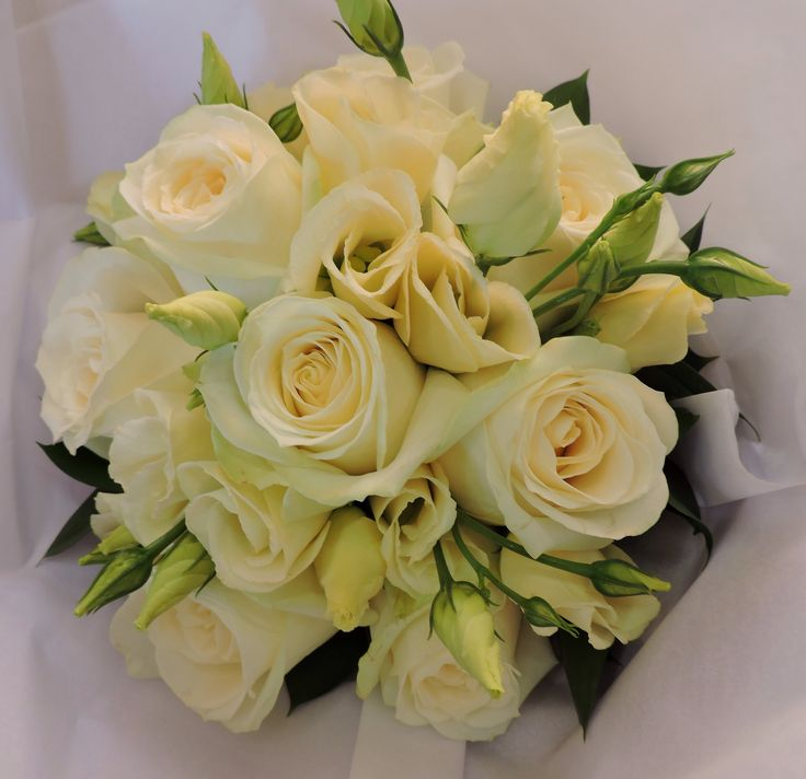 Avalanche roses and cream lizzy