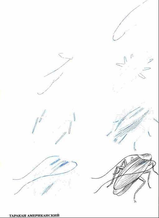 Иллюстрация 4 из 10 для Рисуем 50 насекомых - Эймис, Барнс | Лабиринт - книги. Источник: Спанч Боб