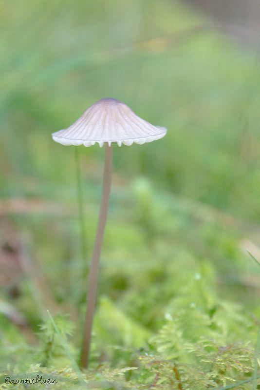 Mushroom Pastel by Auntieblues