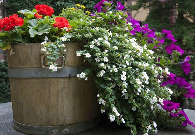 Vasos de Barril de Carvalho ou Decoração | Barril Decoração