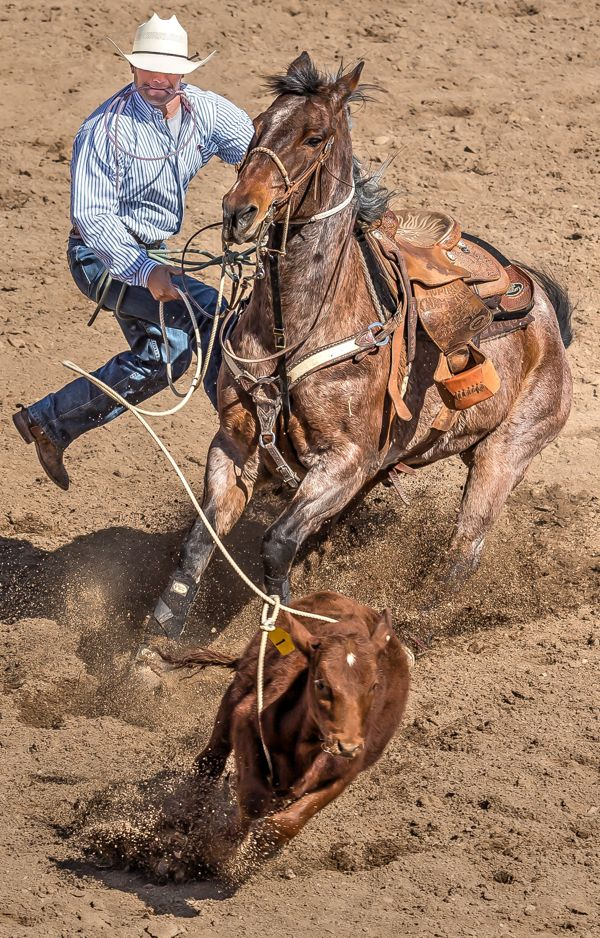Rodeos and Horses by James Gordon Patterson by James Gordon Patterson, via Behance