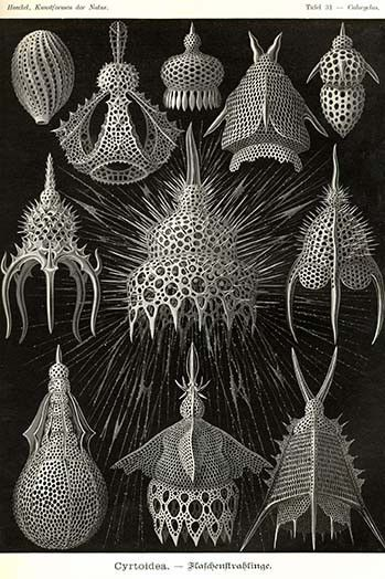 Radiolaria. High quality vintage art reproduction by Buyenlarge. One of many rare and wonderful images brought forward in time. I hope they bring you pleasure each and every time you look at them.