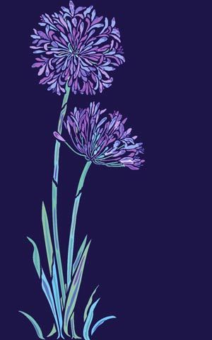 Agapanthus Flower Stencil African Lily
