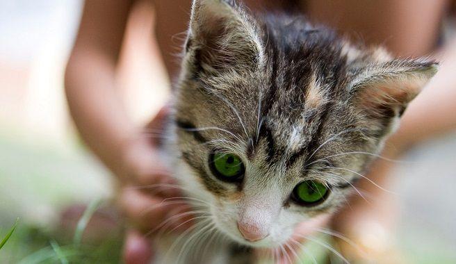 Consejos para eliminar el olor de orina de gato