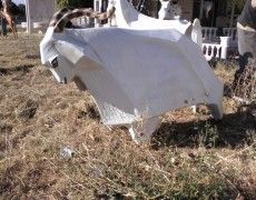Grazing Angora Goat Statue
