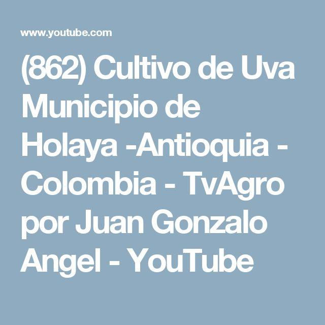 (862) Cultivo de Uva Municipio de Holaya -Antioquia - Colombia - TvAgro por Juan Gonzalo Angel - YouTube