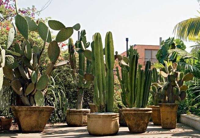 cactus: Flowers Gardens, Cactus Succulents, Landscape Design, Con Cactus, Gardens Features, Cacti Gardens, Gardens Boards, Rodrigo Oliveira, Gardens Outdoor