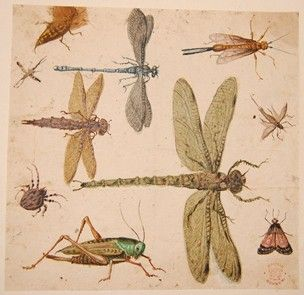 Ten insects, after Hoefnagel, one of 179 drawings from the 1637 album; including three species of dragonfly, a grasshopper, a wood-wasp, a frosted orange moth and a cricket Watercolour and bodycolour, heightened with white