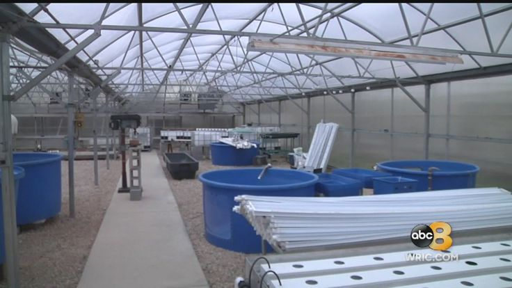 What is aquaponics? Hobbyists utilize unique farming method... In an effort to go green and to be more efficient, some farmers and companies are growing plants and raising fish together.   ... #Aquaponics #Hydroponics #Gardening #Design #hydroponicgardening