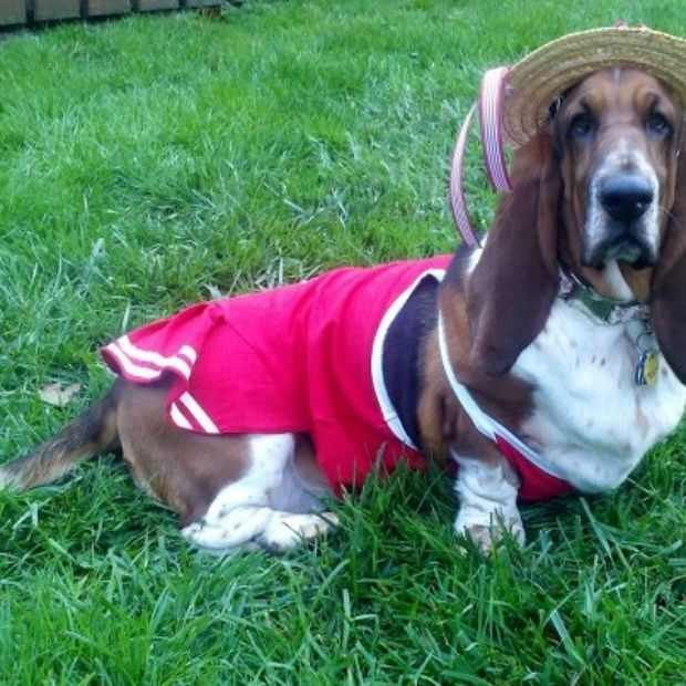 29 best Pet Costumes images on Pinterest | Pet costumes, Costume ...