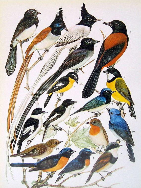 Bird Print Goldcrest Willow Warbler by mysunshinevintage on Etsy