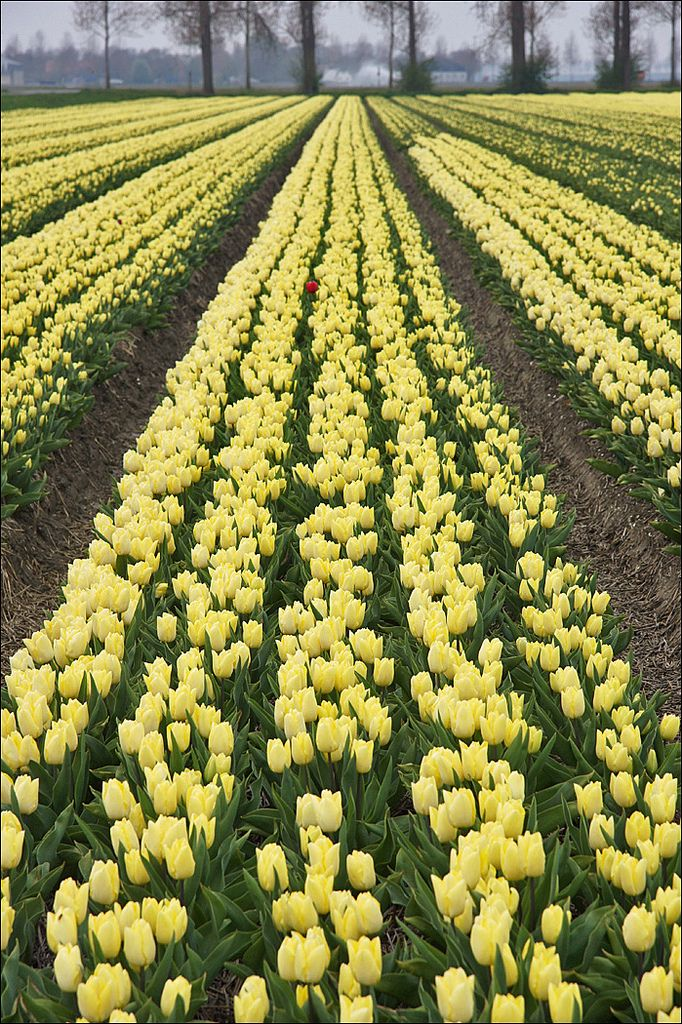 Creil Noordoostpolder Flevoland Fields of