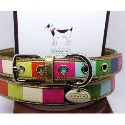 Coach dog collar                                                       …
