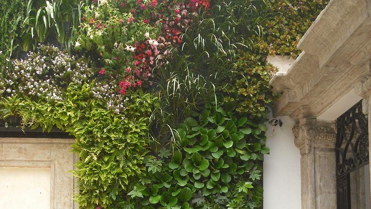 verde 360º En muros verdes se aprovechan todo tipo de plantas