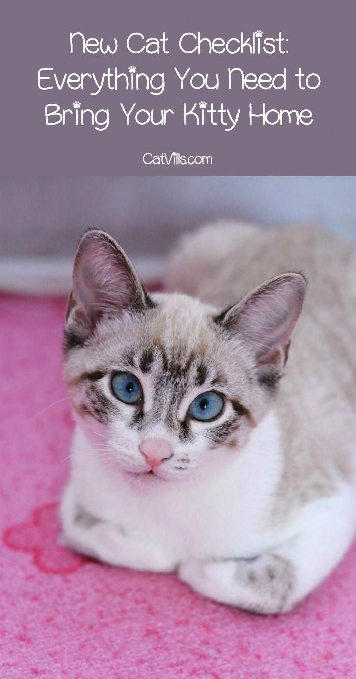 New Cat Checklist For Bringing Kitty Home In Style Cat Checklist Kitten Care Cat Care