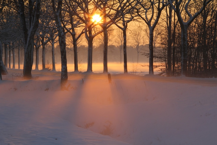 Sunset through trees with haze and snow