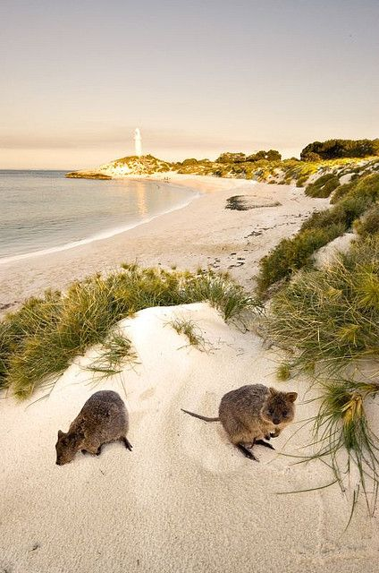 Rottnest Island, Western Australia. An over-nighter with my best friend, Teresa.