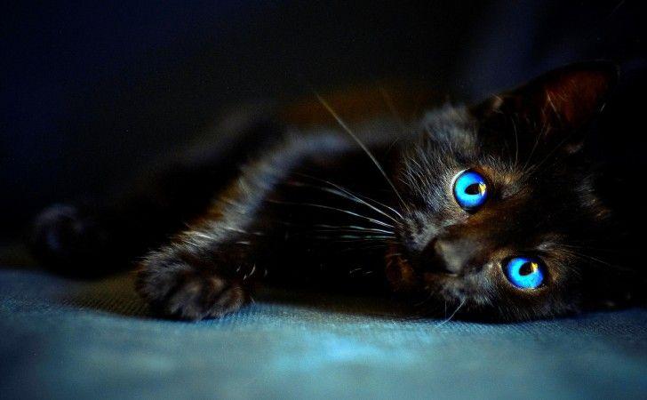 Eyes, fekete, kék, Witch, Állatok