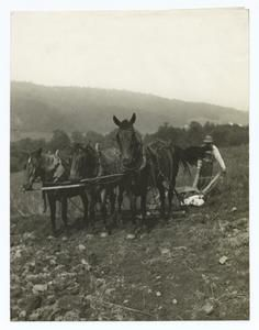 Plowing on the Old Farm.