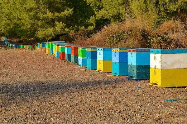 Bunte Bienenkästen - This is just ridiculous - Did you know that bees actually don't even need colored homes that identify where they belong? They are just so much more clever than people think they are! In reality the different colors are for the beekeepers to keep track of their bees and their homes!