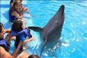 Photos from Dolphin Swim - September 20th - Professionally Photographed by CABO ADVENTURES © 2012