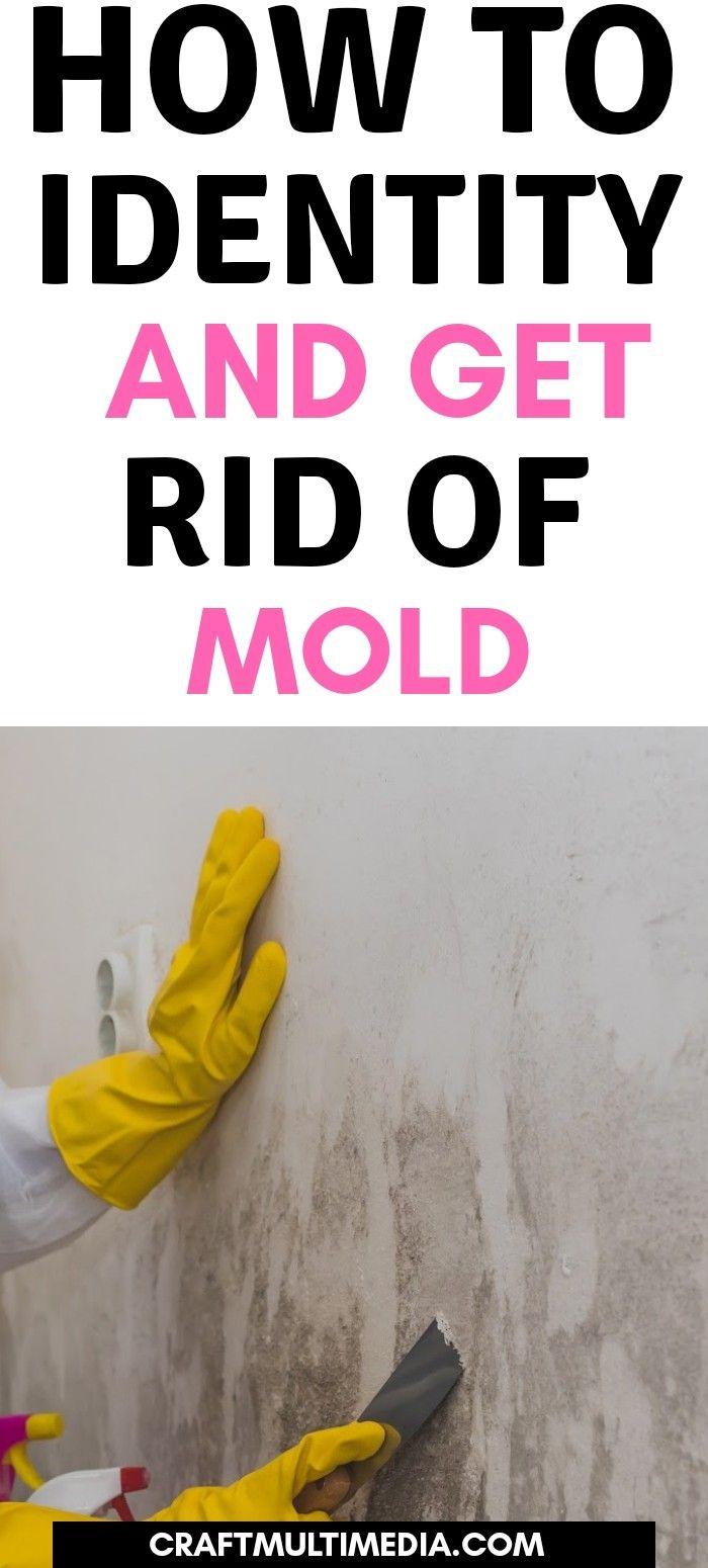 55234c8e9edcb071a3fa670877439686 - How To Get Rid Of The Mold In The House