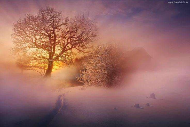 Edycja Tapety: Wschód Słońca, Drzewo, Śnieg, Mgła