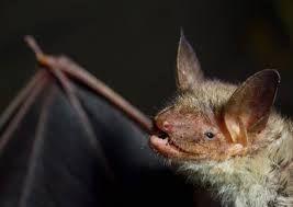 """Résultat de recherche d'images pour """"bat"""""""