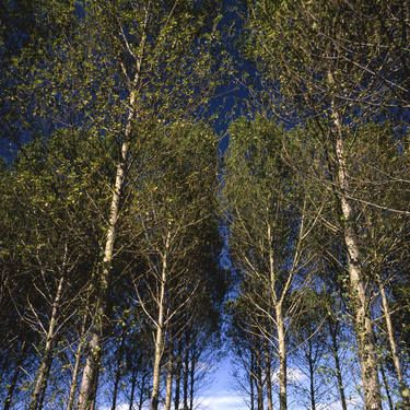 "Saatchi Art Artist Paul Cooklin; Photography, ""Edition 1/10 - Walsham Le Willows II"" #art"