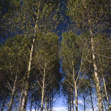 "Saatchi Art Artist Paul Cooklin; Photography, ""Edition 1/10 - Walsham Le Willows II"" #art"