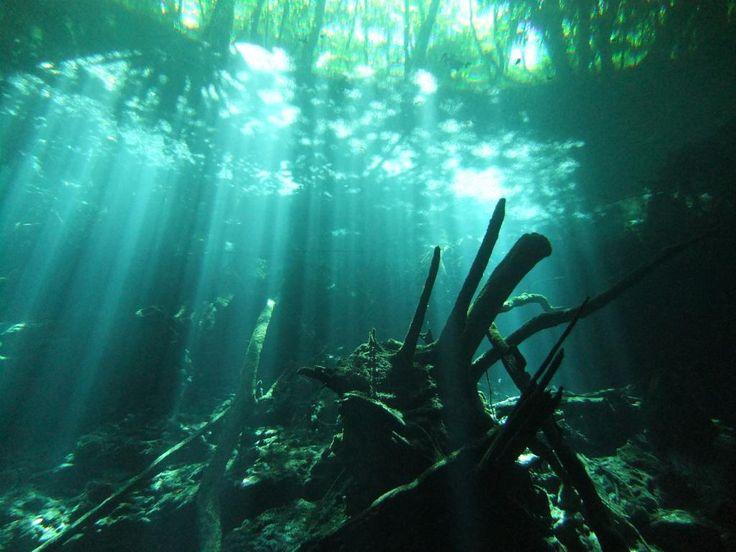 メキシコ、セノーテ。潜ってみたい。100mぐらいの透明度ってどんだけなんだろうか。