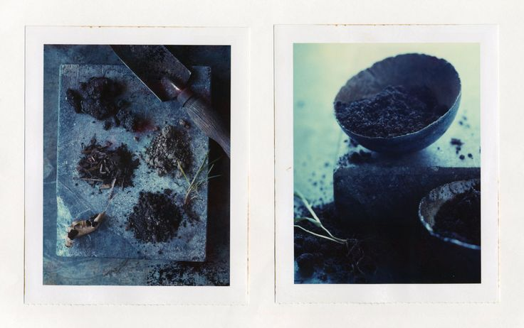 Polaroids by Anna Williams