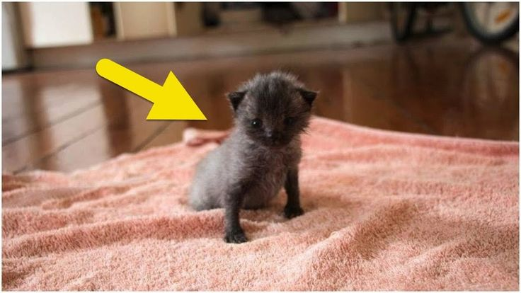 After Finding A Sick Kitten, This Woman Was Stunned When It Began To Cha...