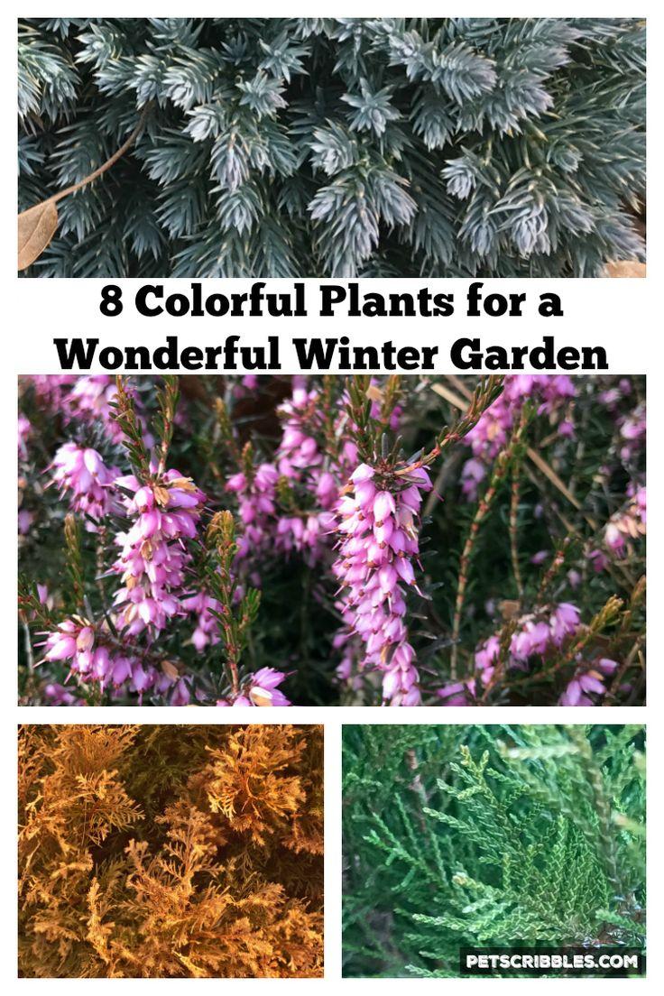 10135 best diy garden images on pinterest garden ideas flower