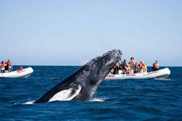Наблюдение за китами на ProBoating.ru