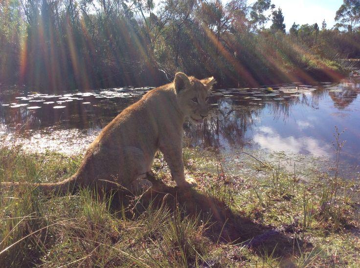 Kuluma @ Tenikwa Wildlife Centre