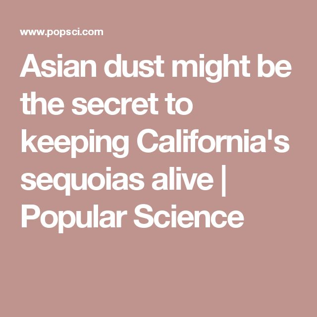 Asian dust might be the secret to keeping California's sequoias alive | Popular Science