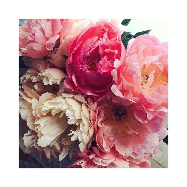 Vännen som alltid har snittblommor hemma  @mirafroling #pion #pioner #pions #lovely flowers #flower #bouquet #pink #luxury #Sunday #inspo #interior #bukett #sommar #lyx #love #flowerinspo #sommarblommor