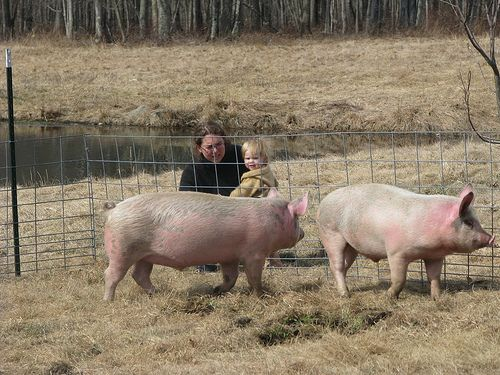 The Cost of Things--Raising Pigs | Terrabyte Farm