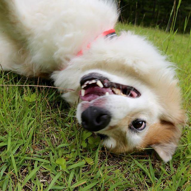 🐕💫 激しくてゴメン💕✨😆 目が血ばしっちゃう😂 . . . #元保護犬 #保護犬 #雑種犬 #繁殖犬 #ライフボート #きなこ #ミックス犬 #里親 #動物愛護 #犬 #愛犬 #dog  #rescueddog #子犬 #愛情 #保護活動 #殺処分 #わんこ #LINEスタンプクリエイターズ #保護犬のわんこ写真集  #保護犬のわんこかるた  #保護犬のわんこスタンプ #instadog  #保護犬のわんこプロジェクト