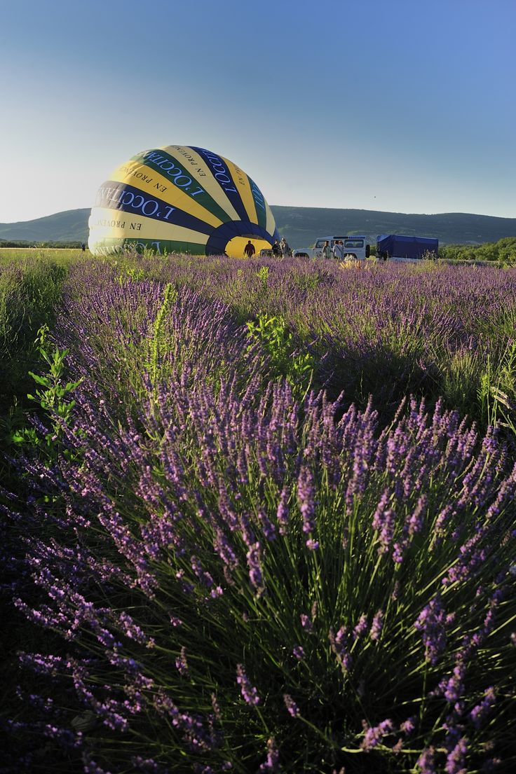 Among the fragrant lavender fields, this balloon starts its journey!  #loccitane en #provence   #repinforsweetskin