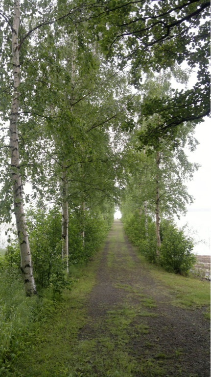 Path to the jetty of Lehtiniemi, Savonlinna, Finland (photo AN)