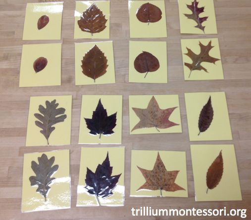 Matching Pressed Leaves.  Can use clear contact paper to 'seal' items.  Other items can transition to other areas like practical life and math: pictures of child and their family, plain pieces of colored paper, letters, numbers and shapes.  Think simple.  Can use later as extensions (pictures - play with those family members, colored paper - same colored item, numbers - the numeral and numbered items like 3 spools of thread, etc)