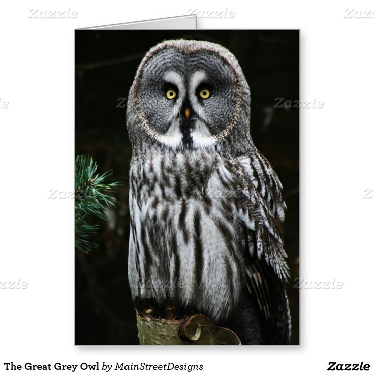 The Great Grey Owl Greeting Card