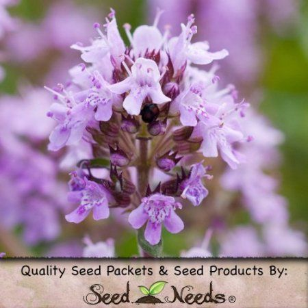 Package of 20,000 Seeds, Creeping Thyme (Thymus serpyllum) Open Pollinated Seeds By Seed Needs