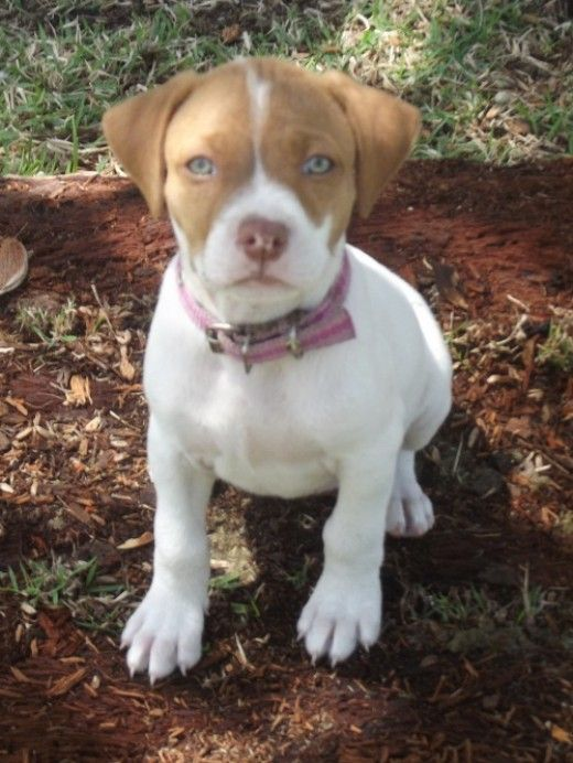 If your puppy can walk and knows what is going on in her world, it is time to start training. There are some things to take into consideration when training a small puppy--start now!